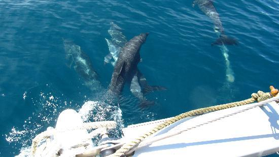 Whale Watching Panama - Day Tours: Dolphin