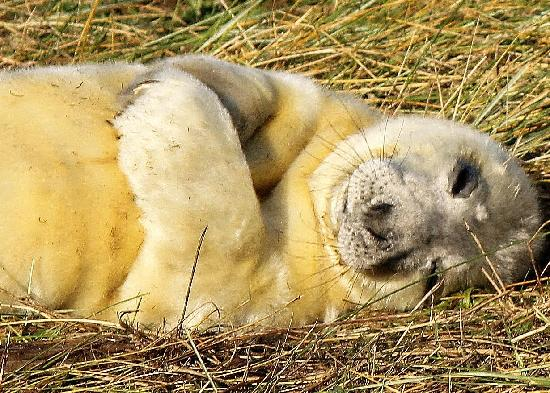 Lincolnshire, UK: Seals 2