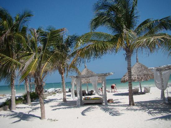 Whale shark tour picture of holbox hotel casa las - Holbox hotel casa las tortugas ...