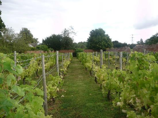 Pengethley Manor Hotel: vineyard