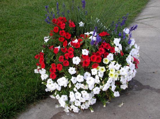 Shipshewana, : More beautilul flowers