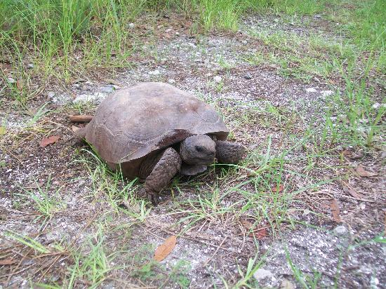 Apopka, Floride : Turle 