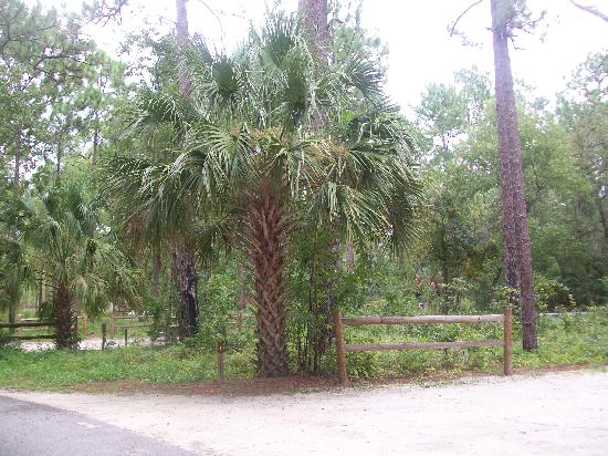 Apopka, Floride : Campsite 1 