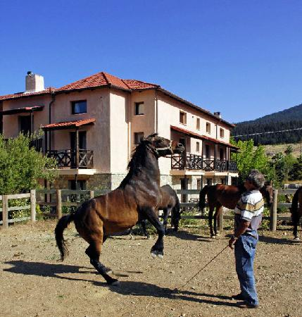 Arachova, Greece: horseriding only for professionals