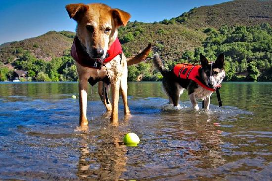 """Pine Acres Resort: """"Lucky"""" Lewis and """"Indiana"""" Swam enjoying swiming in Blue Lakes"""