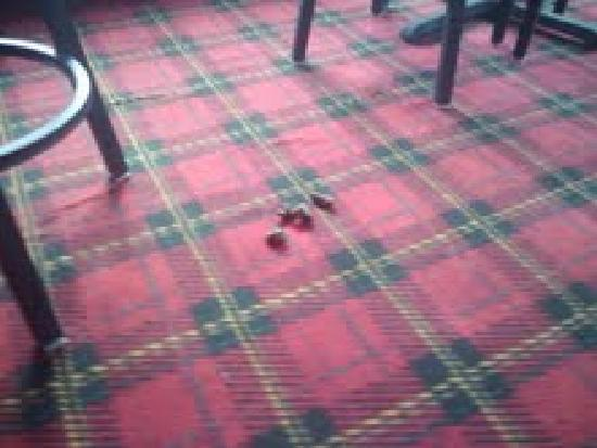 Dog Poop On Floor - Picture Of Cherrywood Lodge