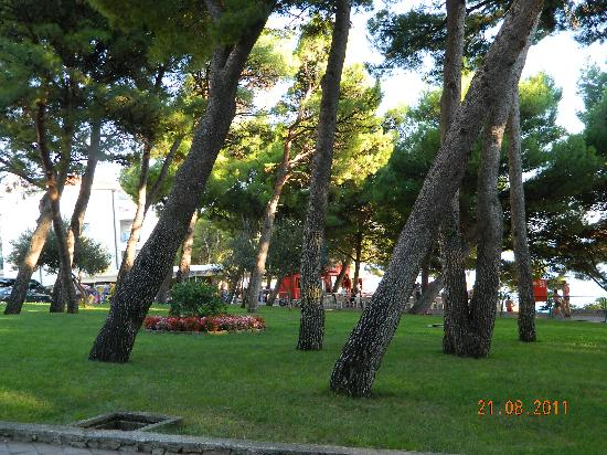 Biokovka: Pine-park with flowers