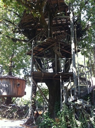 Kerby, OR: one of many burlwood treehouses!