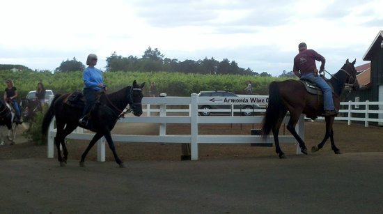 Equestrian Wine Tours