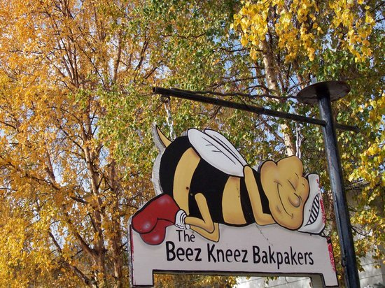 Beez Kneez Bakpakers: The temperature and the leaves are falling....
