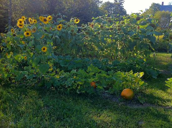 Rossmount Inn: Rossmount Garden - Labor Day Weekend