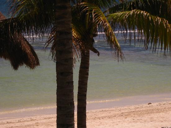 Secrets Silversands Riviera Cancun: Beach is clearer, less seaweed & coral