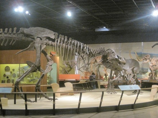 Cleveland museum of natural history oh hours address Dinosaur museum ohio