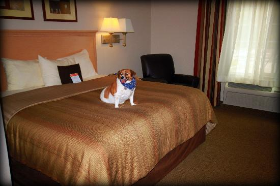 Candlewood Suites Houston, The Woodlands: Even your pup will feel at home!