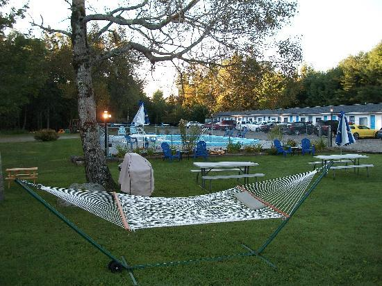 Belle Isle Motel: The pool area, complete with gas grill and hammock