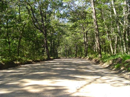 Sweetwater Forest Campground: Sweetwater Forest Main Road-Nature's Welcome to relaxation & fun!