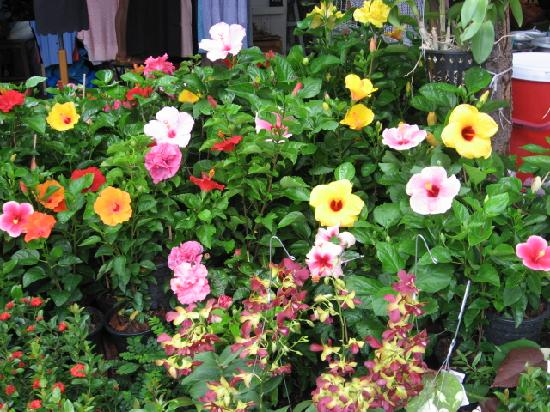 The gallery for flowering house plants with names - Best indoor flowering plants ...