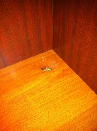 Candlewood Suites - Austin South: up close, large cockroach