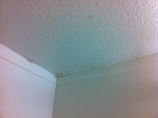 Motel 6 Santa Rosa North: the mold seems happy at least