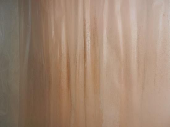how to clean mould on shower curtains