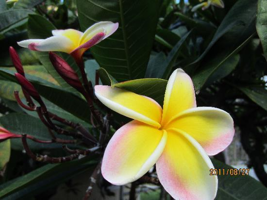 Flowers And Tropical Plants Picture Of Waimanalo Beach Cottages Waimanalo Tripadvisor