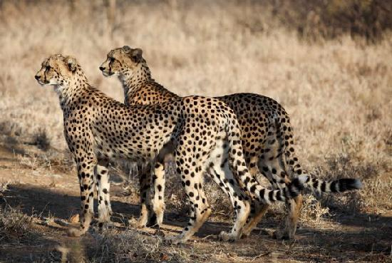 Makalali Private Game Reserve, South Africa: One of the many great sights you will experience on a game drive at Garonga