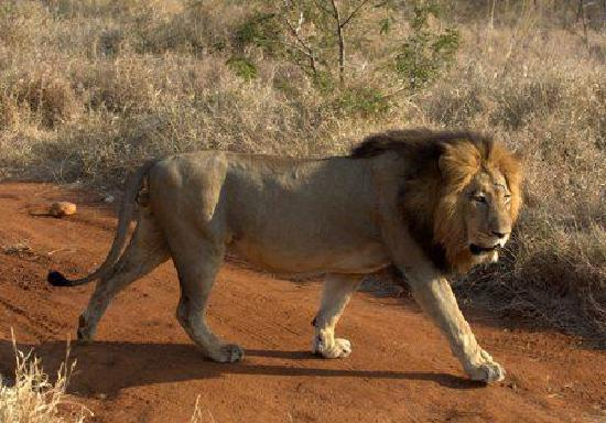 Makalali Private Game Reserve, Afrika Selatan: We really did get this close to him!