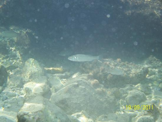 Tigaki's Star Hotel : New underwater camera bought - why not, the sea is so clear!