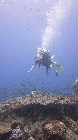 Calypso Diving in Bophut – Take a Dive into the Big Blue