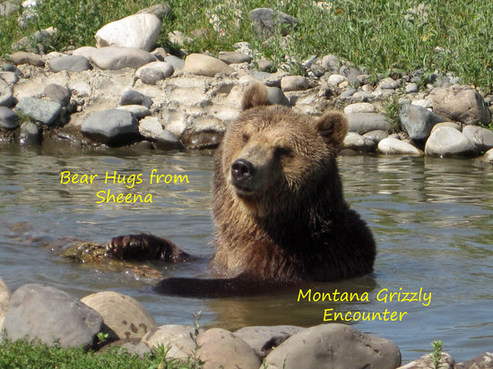 Bozeman, MT : Sheena playing in the pond