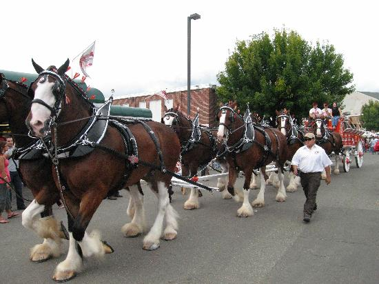 West Springfield, MA: Clydesdale Horses in the parade