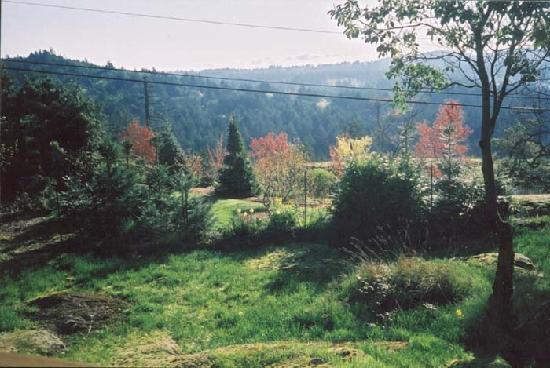 Arbutus Hill Bed and Breakfast : The view
