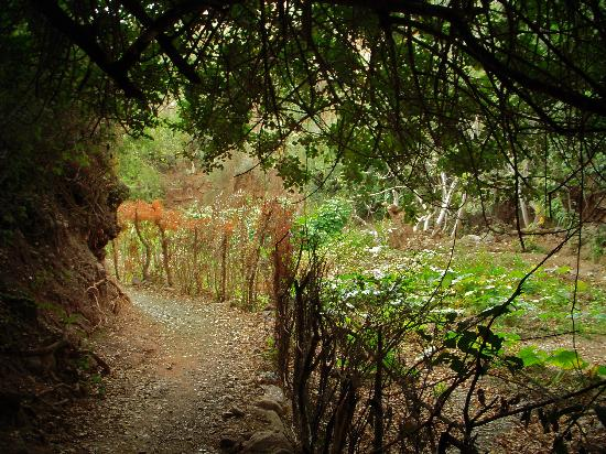 DOMAINE MALIKA Atlas mountains Hotel: Path and a garden plot