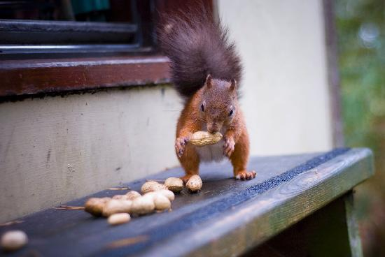 Penrith, UK : the kids will love hand feeding the squirels
