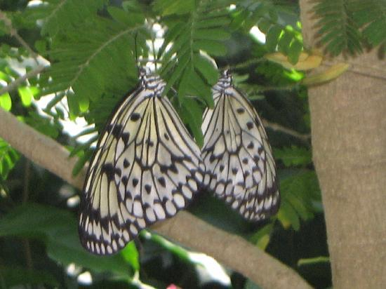 Gainesville, فلوريدا: close up butterfly4