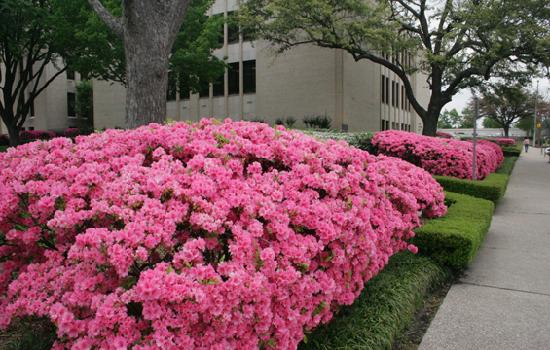 Longview, TX: Gregg County Courthouse Grounds