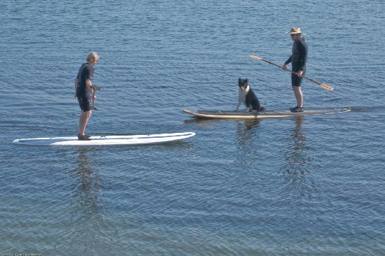Morro Bay, CA: Discover Stand-Up Paddleboarding, a fun activity for anyone!