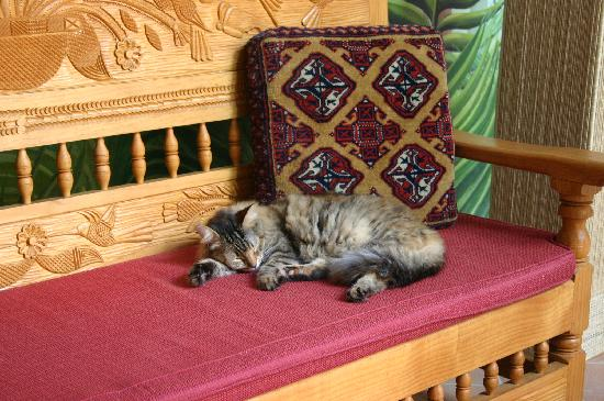 Hotel Casa San Angel: Tiger, the cat