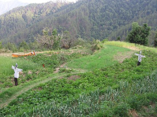 Binsar, India: A shot of the fields