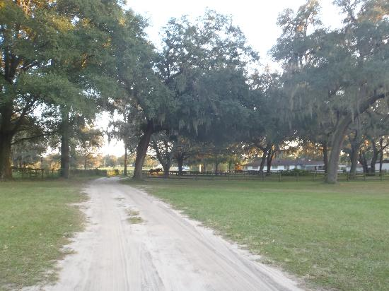 Hilton Ocala: Back of property