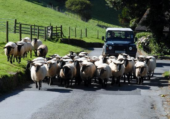 Martinhoe, UK: Travelling can be a bit slow at times - but never mind!