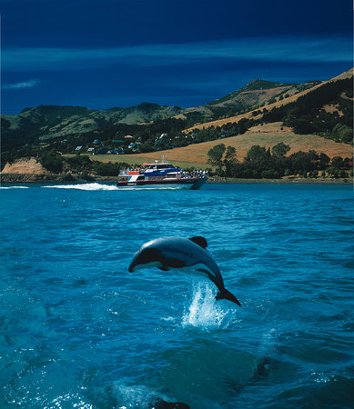 Akaroa Harbour Nature Cruises - Black Cat Cruises
