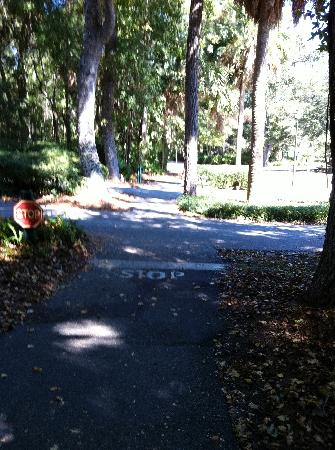 Hilton Head Health: One of the beautiful walking/biking paths