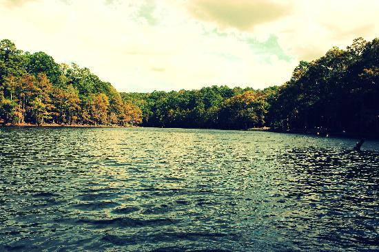 Sawmill pond at caddo lake sp picture of karnack texas for Caddo lake fishing report