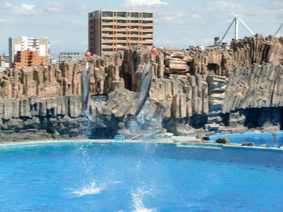 イワシトルネードとサメ - Picture of Port of Nagoya Public Aquarium, Nagoya - TripAdvisor