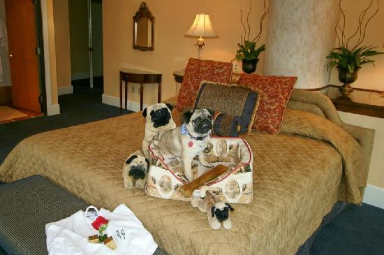 Haywood Park Hotel : Dog Friendly :)