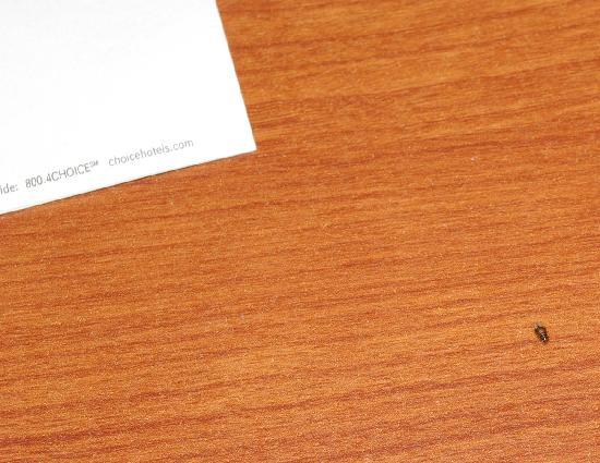 Quality Inn & Suites: The bug on the nightstand, near the notepaper I used to lift it off the wall.