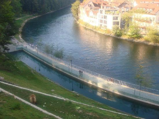 Berna, Suiza: Bears at Bern