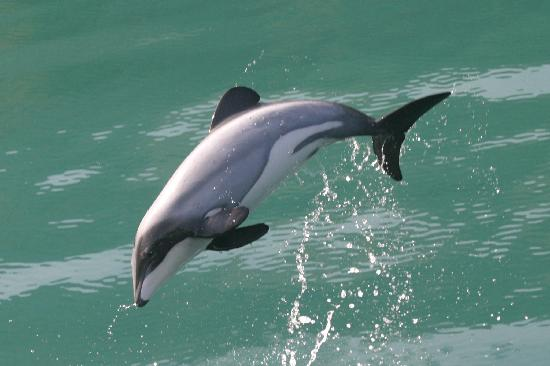 Dolphin Watch & Nature Tours