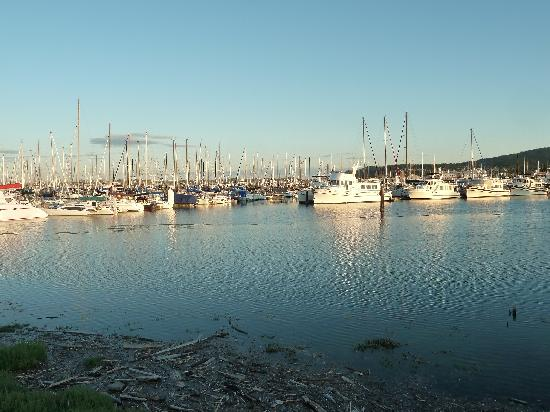 Cap Sante Inn: Just a few of the many boats in the harbor